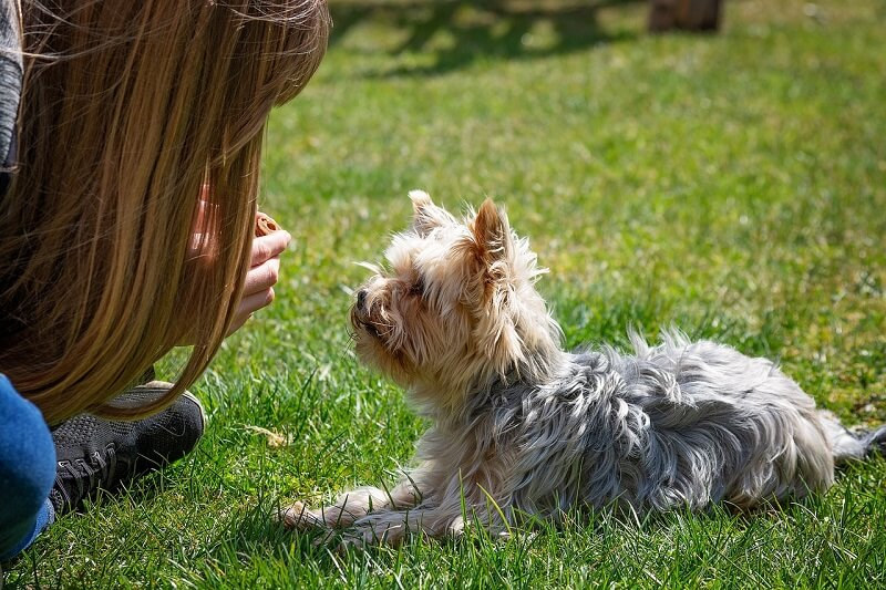 Prevent chewing by keeping dog busy