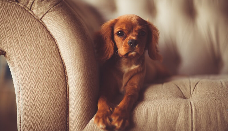 Protecting furniture from pets